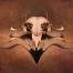 Falco Luciferus